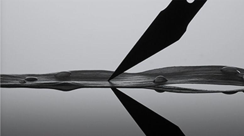 墨藻:被赋予天赐的卓越生命力